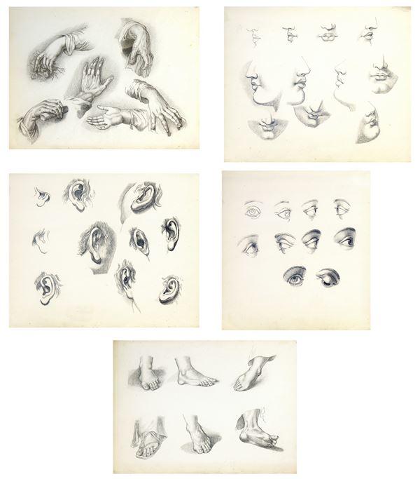Maestro del Novecento, lotto composto da cinque raffinati studi di anatomia, grafite su carta, ciascuno circa cm 37x30